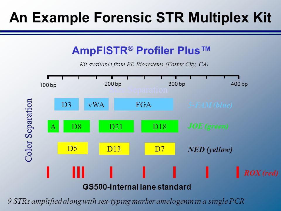 An Example Forensic STR Multiplex Kit D3FGAvWA 5-FAM (blue) D13 D5 D7 NED (yellow) AD8D21D18 JOE (green) GS500-internal lane standard ROX (red) AmpFlS