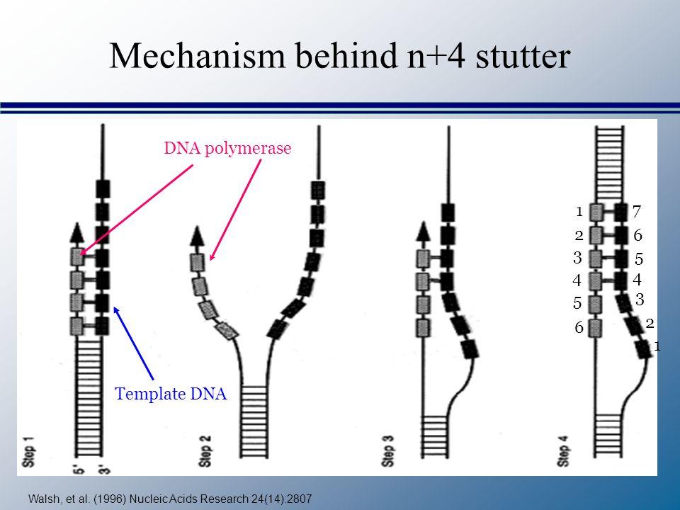 Mechanism behind n+4 stutter Walsh, et al. (1996) Nucleic Acids Research 24(14):2807 DNA polymerase Template DNA 1 2 3 4 5 6 1 2 3 4 5 6 7