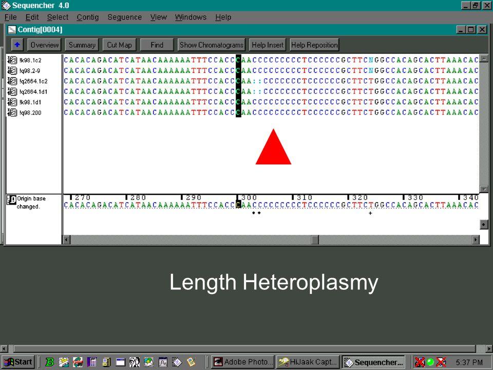 Length Heteroplasmy