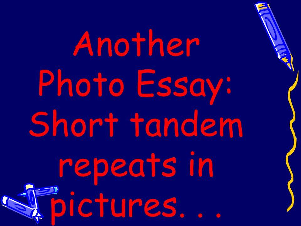 STR Short Tandem Repeats