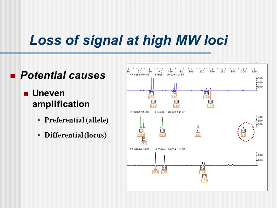 Loss of signal at high MW loci Potential causes Uneven amplification Preferential (allele) Differential (locus)