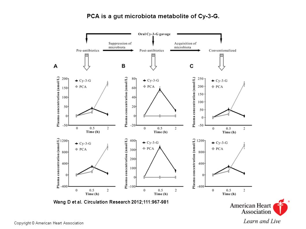 PCA is a gut microbiota metabolite of Cy-3-G. Wang D et al.