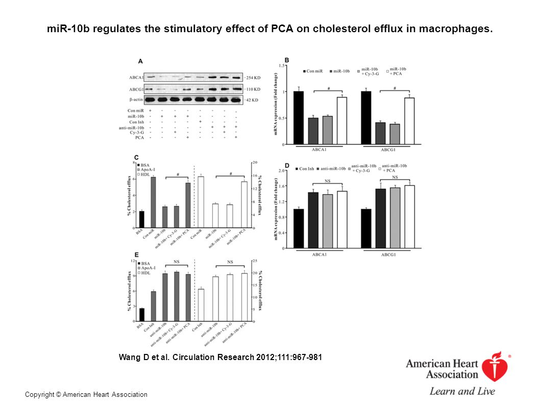Cy-3-G accelerates cholesterol efflux from macrophages ex vivo and in vivo through its metabolite PCA.