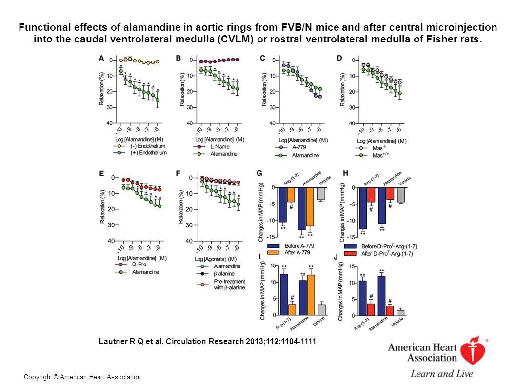 Pharmacodynamics and functional effects of alamandine.