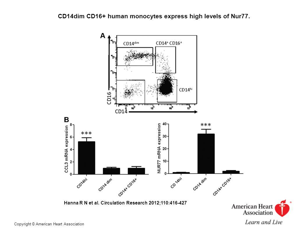 CD14dim CD16+ human monocytes express high levels of Nur77.