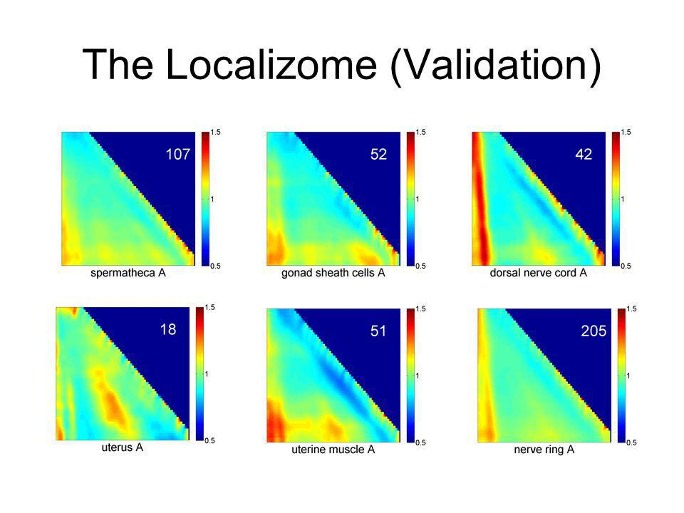 The Localizome (Validation)