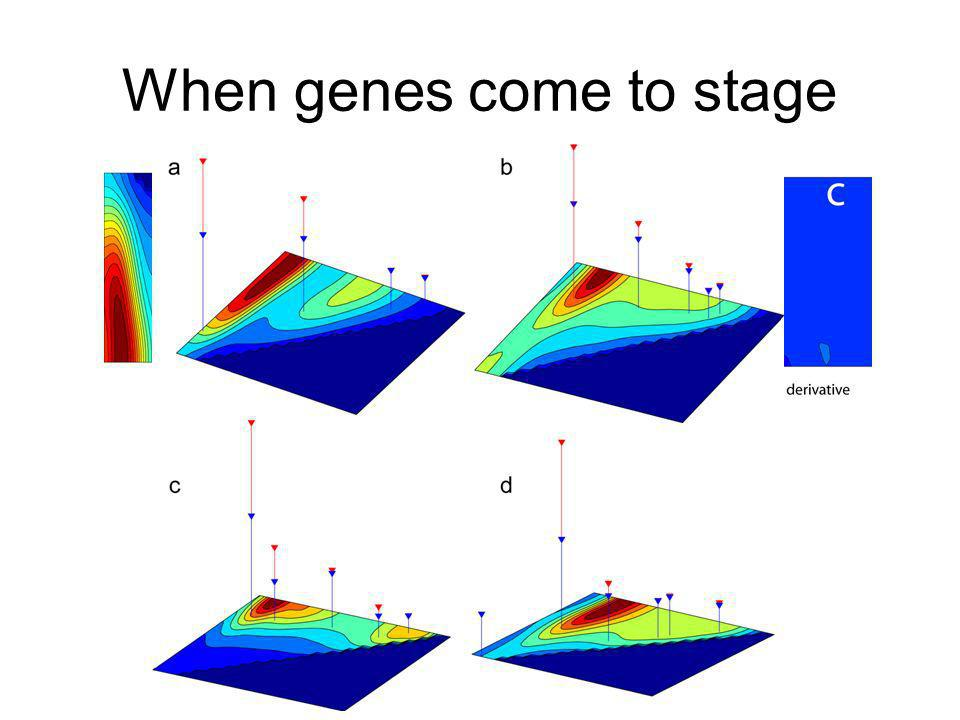 When genes come to stage