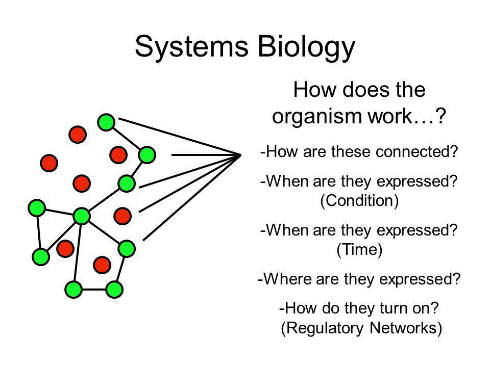 Systems Biology RNAi MicroArray GFP-Localization PPI Genetic Interactions Regulatory Networks -How are these connected? -When are they expressed? (Con