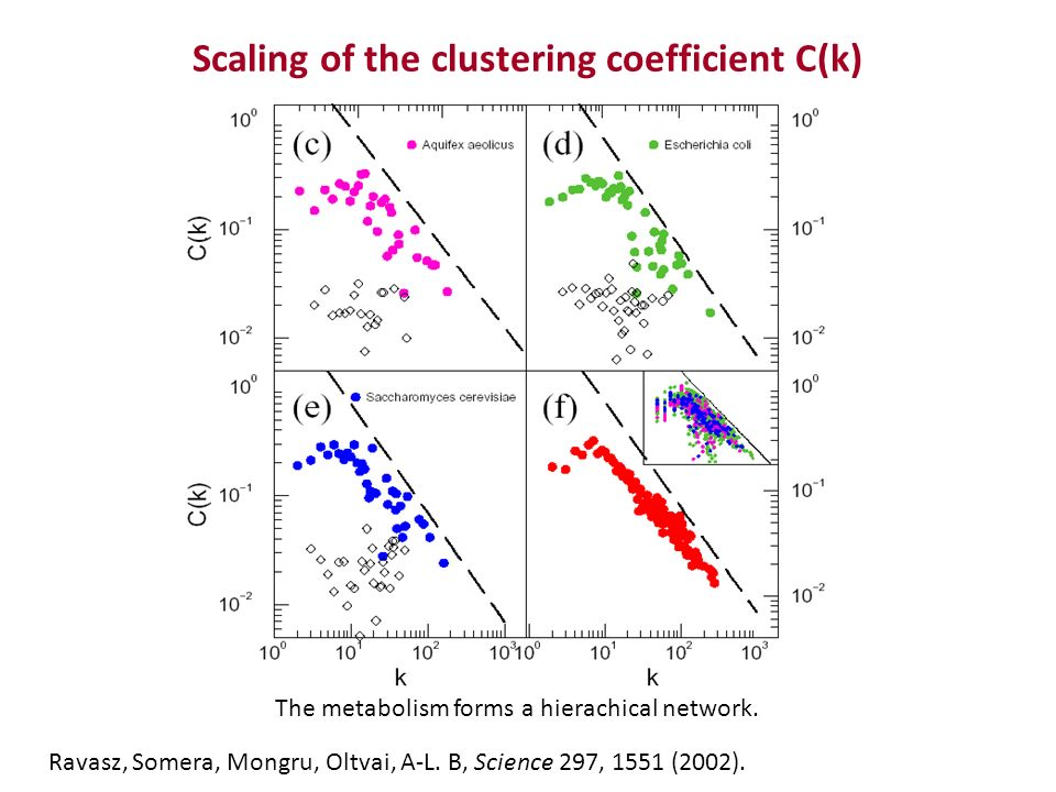Scaling of the clustering coefficient C(k) The metabolism forms a hierachical network.