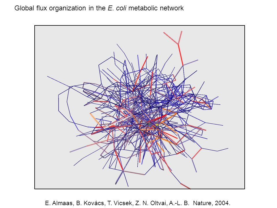 Global flux organization in the E. coli metabolic network E.