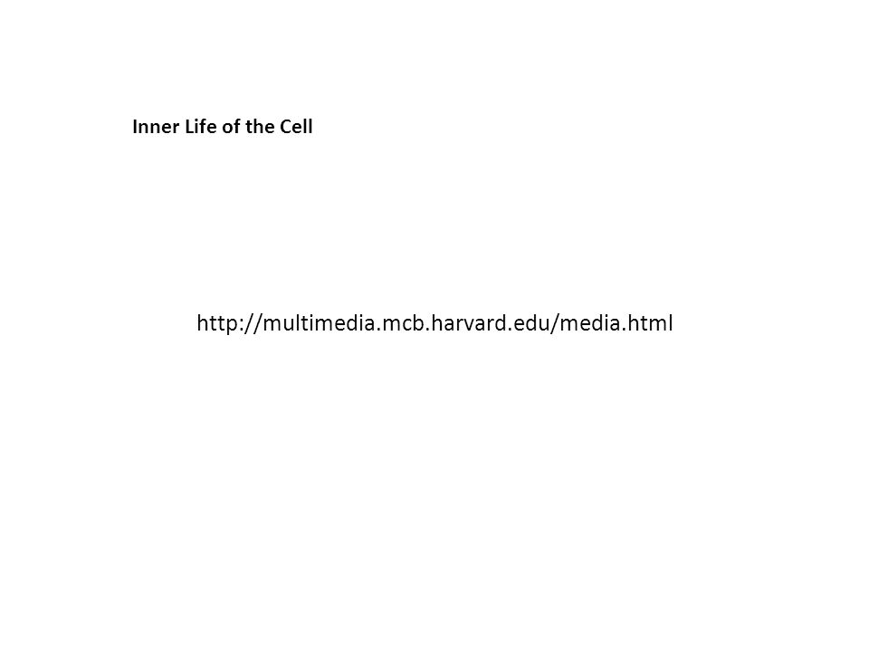 http://multimedia.mcb.harvard.edu/media.html Inner Life of the Cell