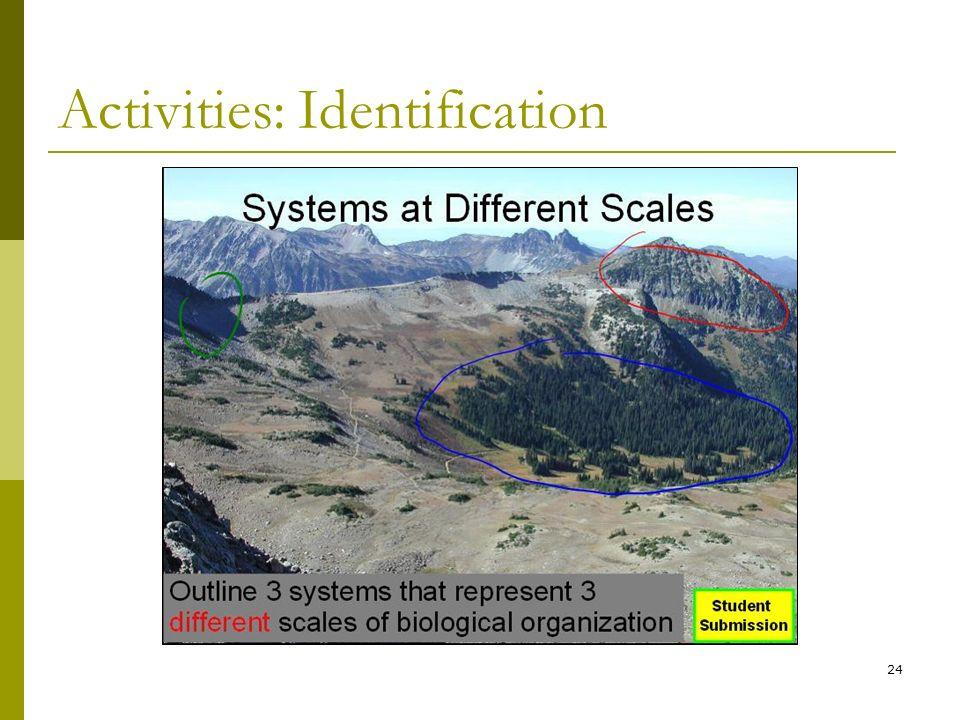 24 Activities: Identification