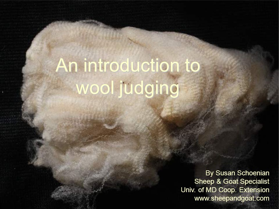 An introduction to wool judging By Susan Schoenian Sheep & Goat Specialist Univ. of MD Coop. Extension www.sheepandgoat.com