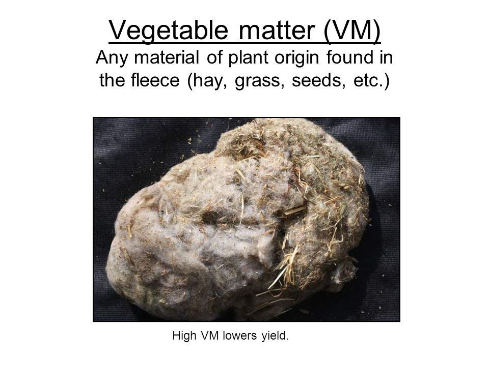 Vegetable matter (VM) Any material of plant origin found in the fleece (hay, grass, seeds, etc.) High VM lowers yield.