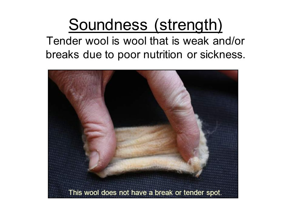 Soundness (strength) Tender wool is wool that is weak and/or breaks due to poor nutrition or sickness. This wool does not have a break or tender spot.