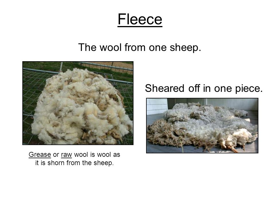 Fleece The wool from one sheep. Sheared off in one piece. Grease or raw wool is wool as it is shorn from the sheep.
