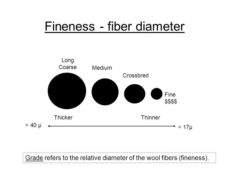 Fineness - fiber diameter Fine $$$$ Crossbred Medium Long Coarse Grade refers to the relative diameter of the wool fibers (fineness). Thicker Thinner