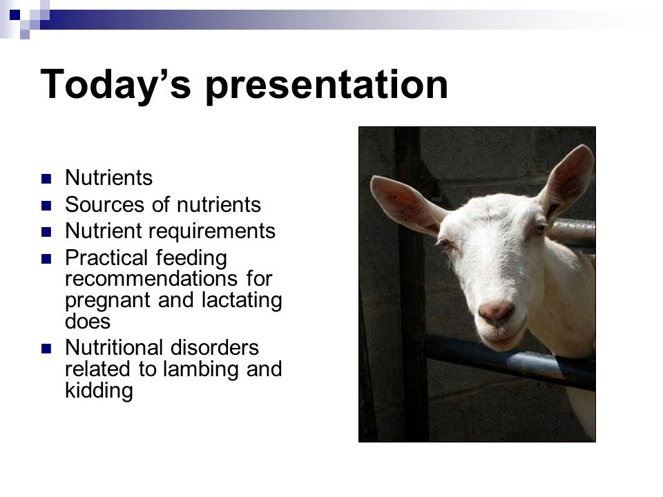 Todays presentation Nutrients Sources of nutrients Nutrient requirements Practical feeding recommendations for pregnant and lactating does Nutritional