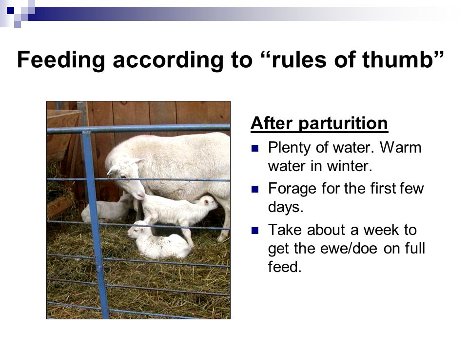 Feeding according to rules of thumb After parturition Plenty of water. Warm water in winter. Forage for the first few days. Take about a week to get t