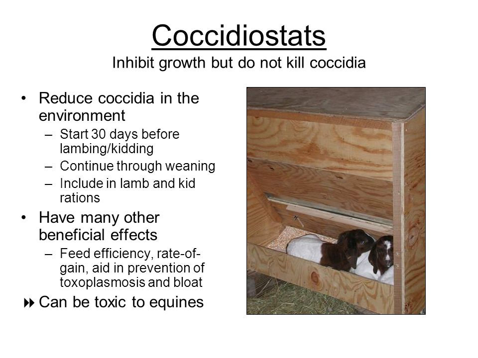 Coccidiostats Inhibit growth but do not kill coccidia Reduce coccidia in the environment –Start 30 days before lambing/kidding –Continue through weani