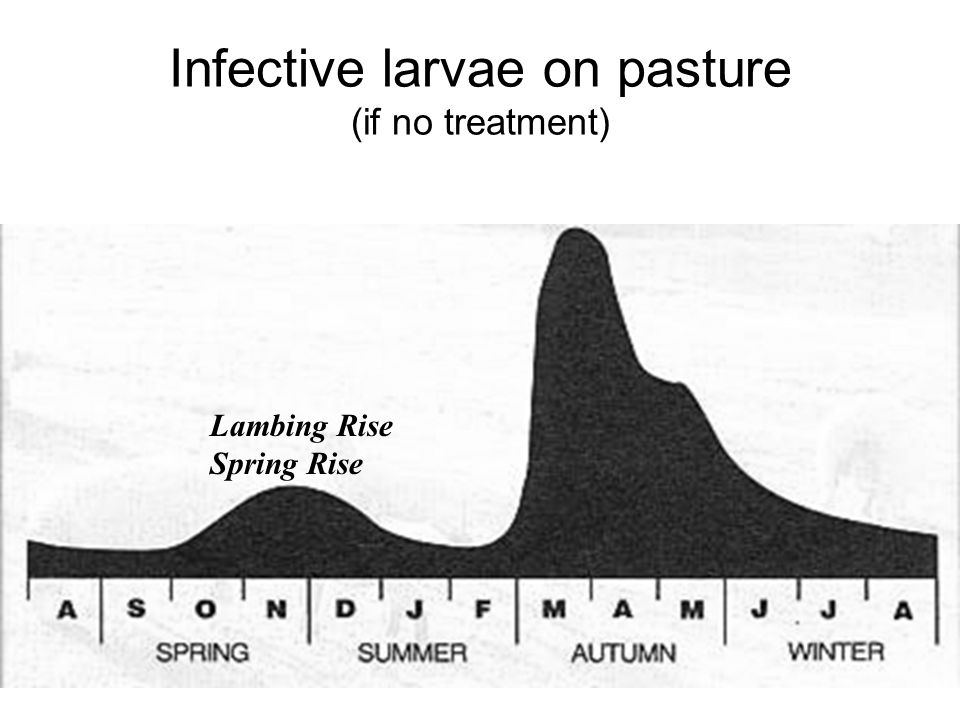Infective larvae on pasture (if no treatment) Lambing Rise Spring Rise