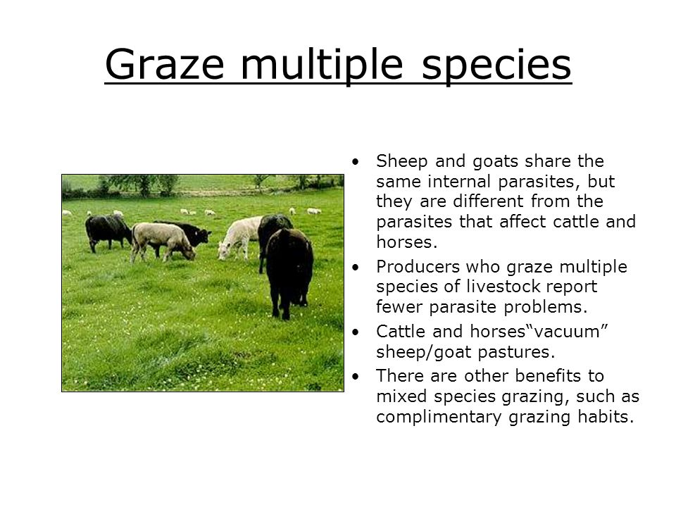 Graze multiple species Sheep and goats share the same internal parasites, but they are different from the parasites that affect cattle and horses. Pro