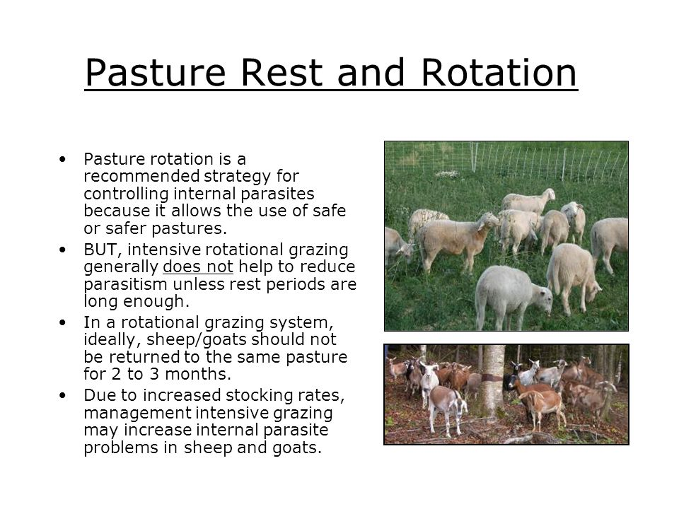 Pasture Rest and Rotation Pasture rotation is a recommended strategy for controlling internal parasites because it allows the use of safe or safer pas
