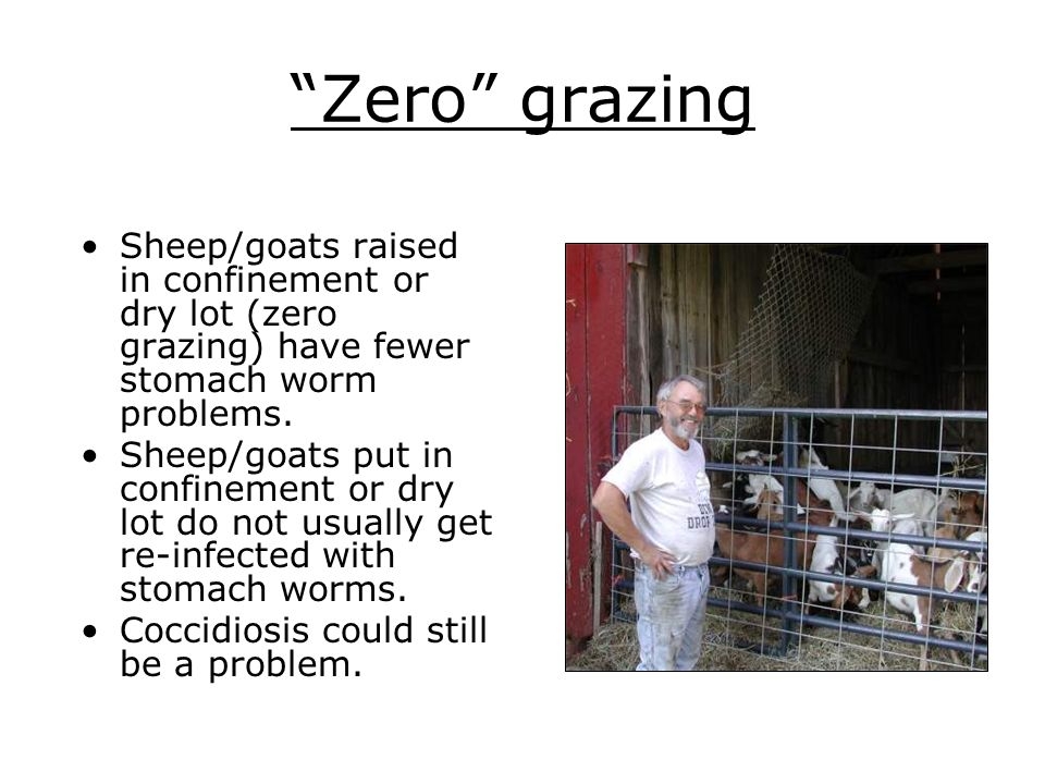 Zero grazing Sheep/goats raised in confinement or dry lot (zero grazing) have fewer stomach worm problems. Sheep/goats put in confinement or dry lot d