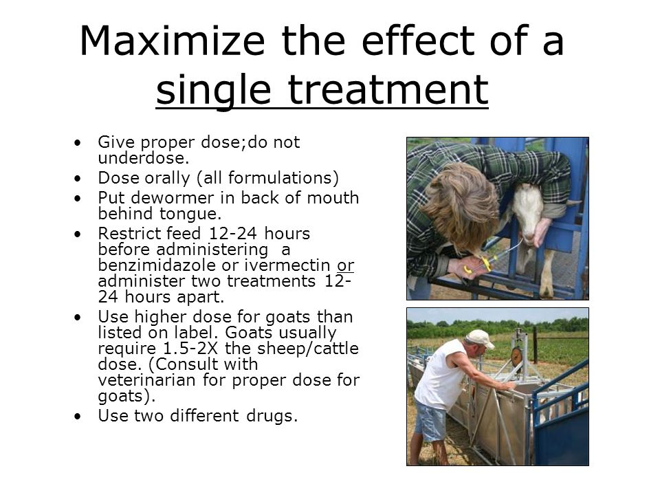 Maximize the effect of a single treatment Give proper dose;do not underdose. Dose orally (all formulations) Put dewormer in back of mouth behind tongu