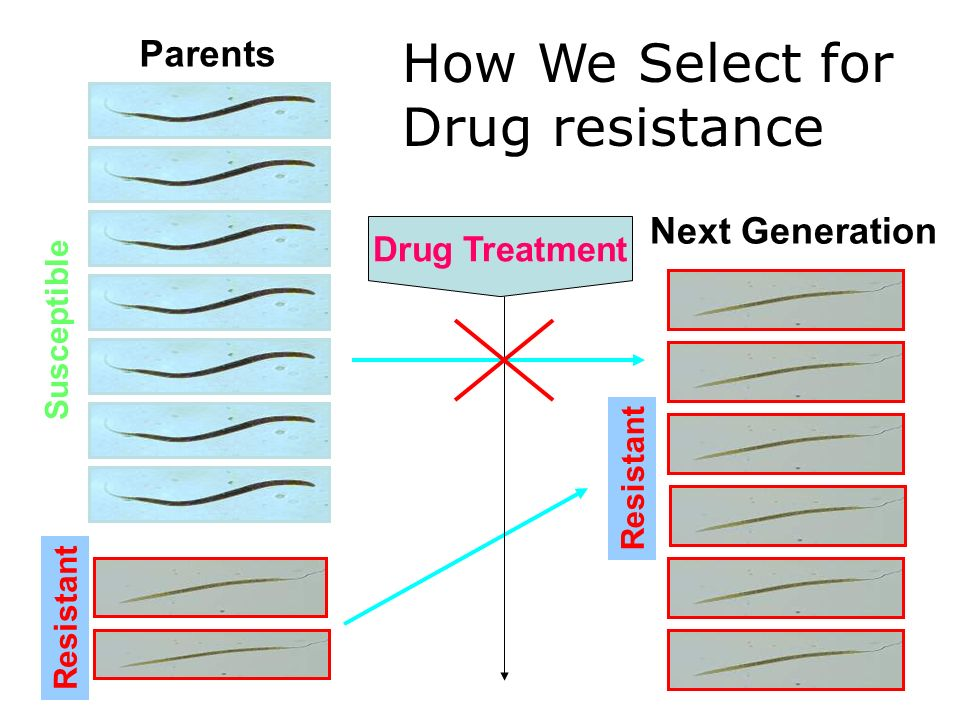 Parents How We Select for Drug resistance Resistant Susceptible Next Generation Resistant Drug Treatment