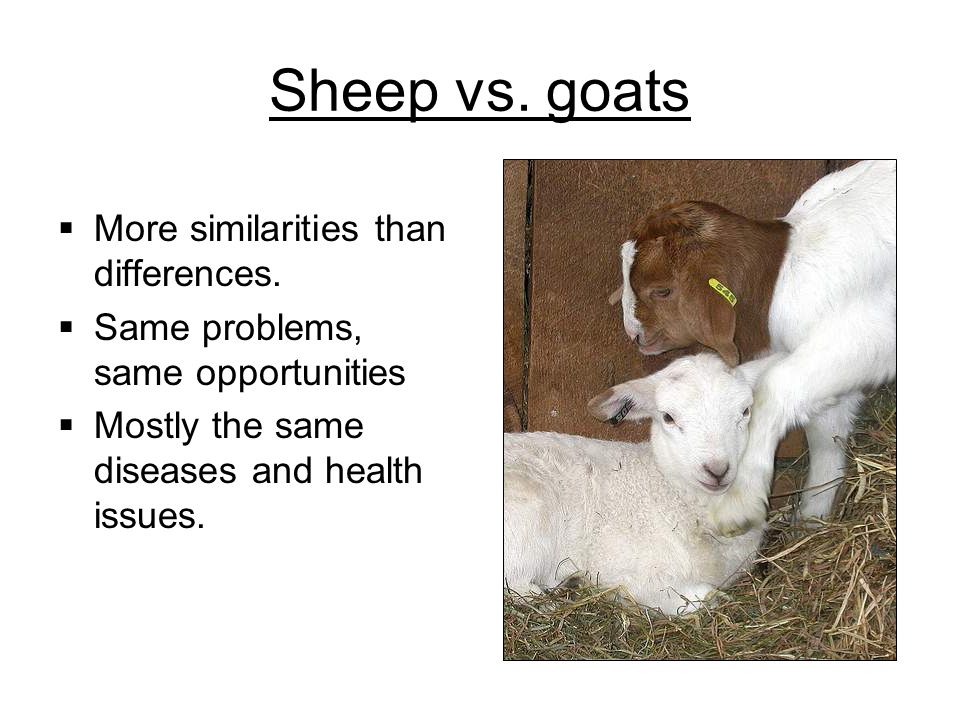 Sheep vs. goats More similarities than differences. Same problems, same opportunities Mostly the same diseases and health issues.