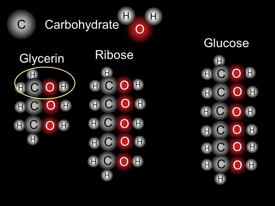 O C Glycerin H H H H H H O C O C C O H H O H H H H H O C O C C H H O H H H O C C H H Ribose H H Carbohydrate O H H H H H O C O C C H H O H H H O C C H