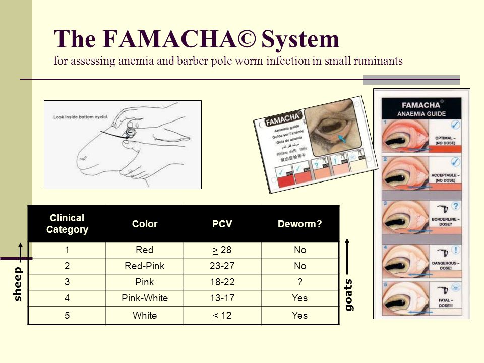 The FAMACHA© System for assessing anemia and barber pole worm infection in small ruminants Clinical Category ColorPCVDeworm? 1Red> 28No 2Red-Pink23-27