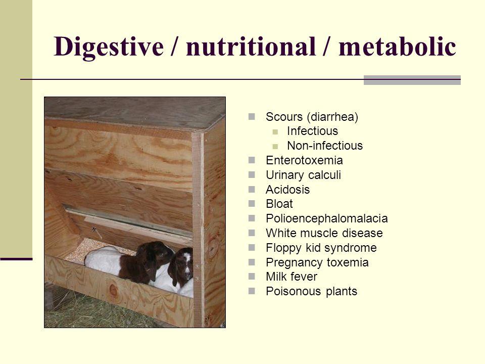 Digestive / nutritional / metabolic Scours (diarrhea) Infectious Non-infectious Enterotoxemia Urinary calculi Acidosis Bloat Polioencephalomalacia Whi