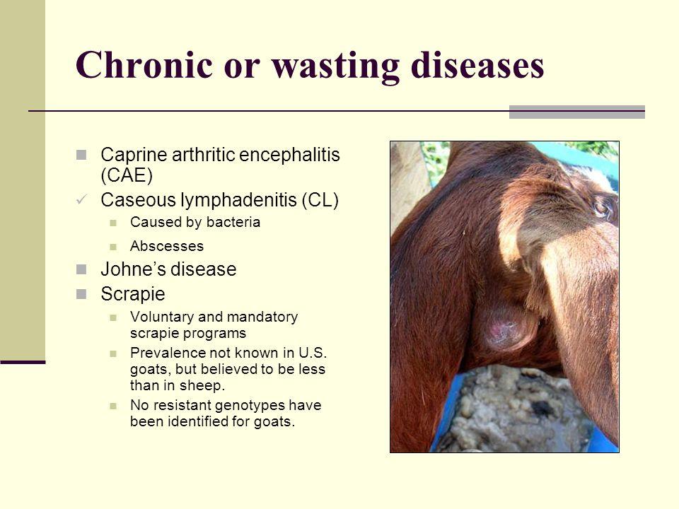 Chronic or wasting diseases Caprine arthritic encephalitis (CAE) Caseous lymphadenitis (CL) Caused by bacteria Abscesses Johnes disease Scrapie Volunt
