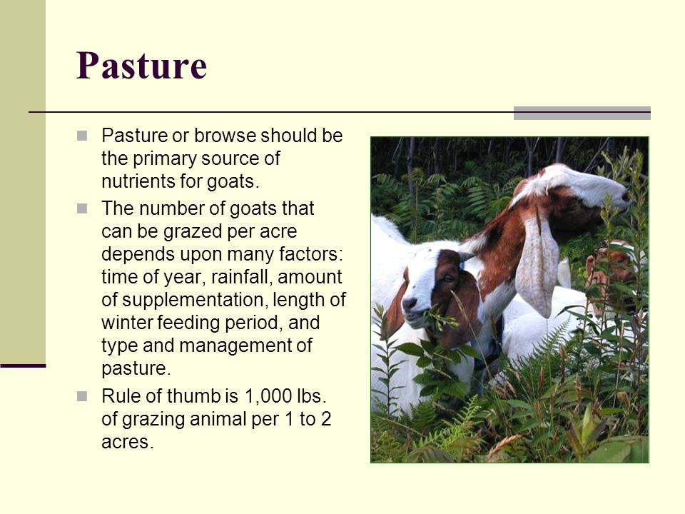 Pasture Pasture or browse should be the primary source of nutrients for goats. The number of goats that can be grazed per acre depends upon many facto