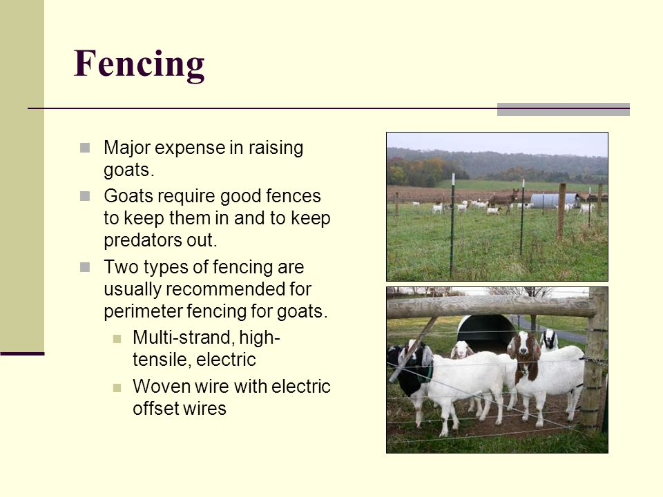 Fencing Major expense in raising goats. Goats require good fences to keep them in and to keep predators out. Two types of fencing are usually recommen