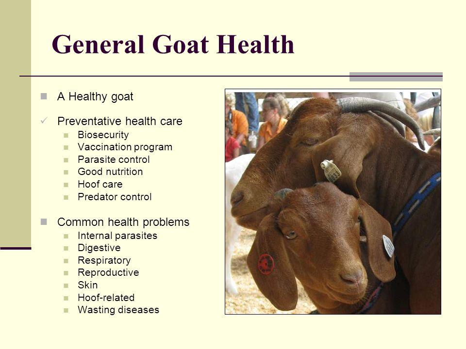 General Goat Health A Healthy goat Preventative health care Biosecurity Vaccination program Parasite control Good nutrition Hoof care Predator control