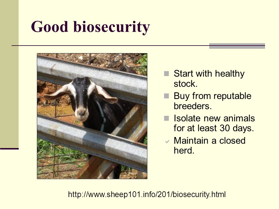Good biosecurity Start with healthy stock. Buy from reputable breeders. Isolate new animals for at least 30 days. Maintain a closed herd. http://www.s