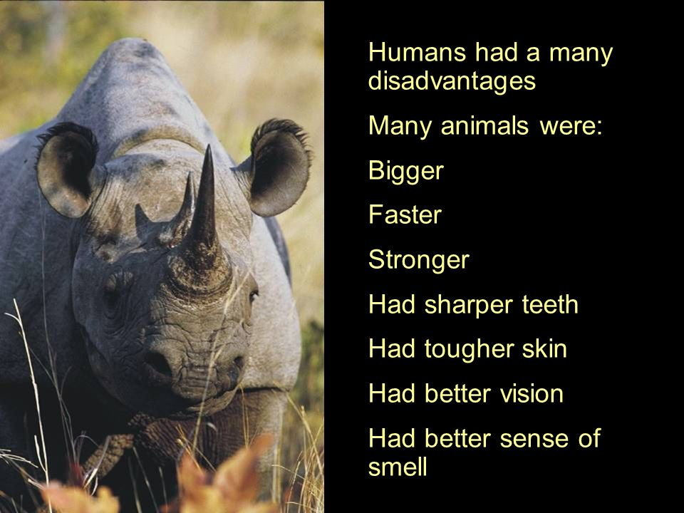Humans had a many disadvantages Many animals were: Bigger Faster Stronger Had sharper teeth Had tougher skin Had better vision Had better sense of smell