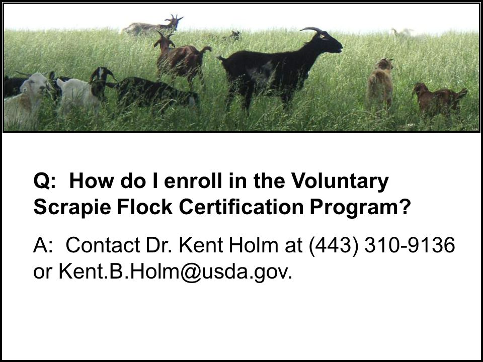 Q: How do I enroll in the Voluntary Scrapie Flock Certification Program.
