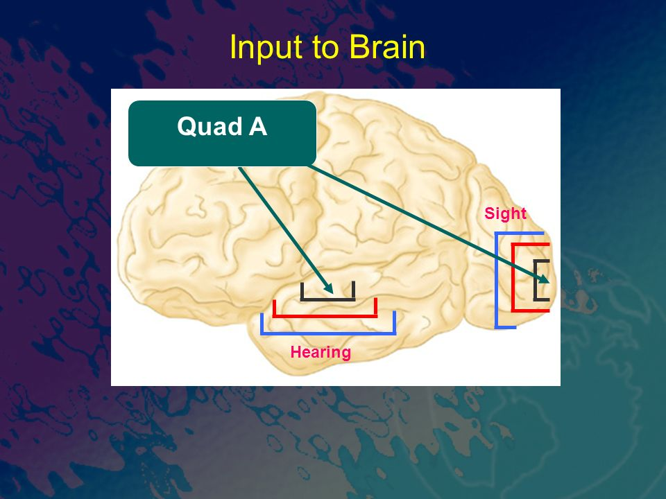Sight Hearing Quad A Input to Brain