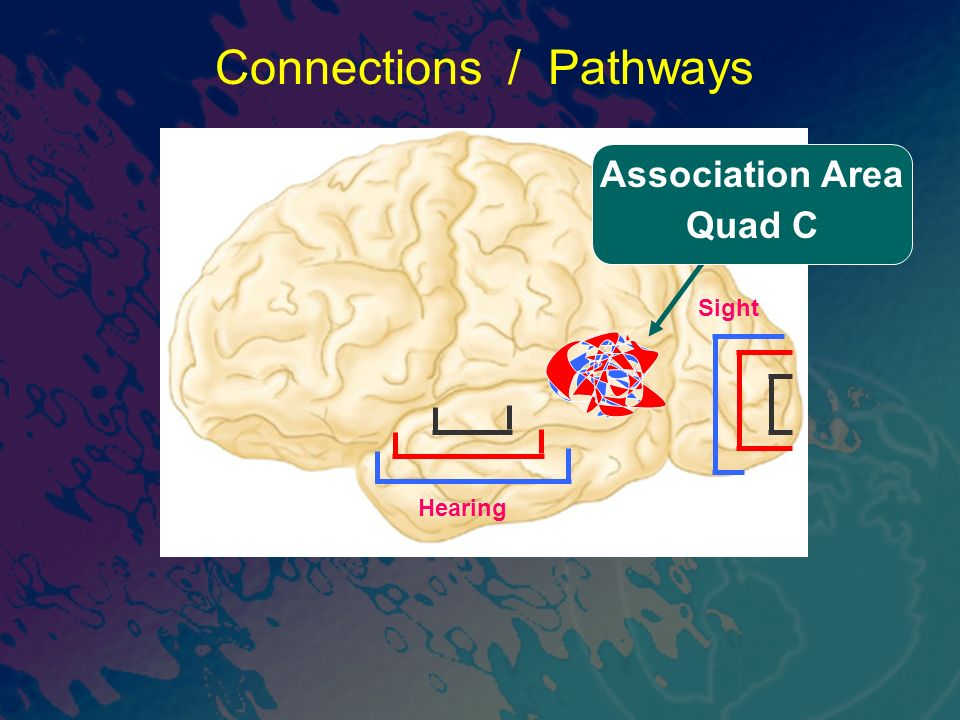 Sight Connections / Pathways Hearing Association Area Quad C