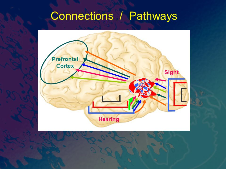 Sight Connections / Pathways Prefrontal Cortex Hearing