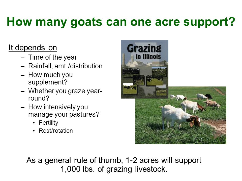 How many goats can one acre support.