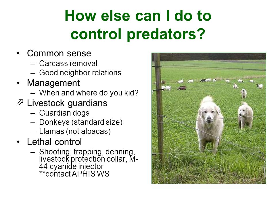 How else can I do to control predators.