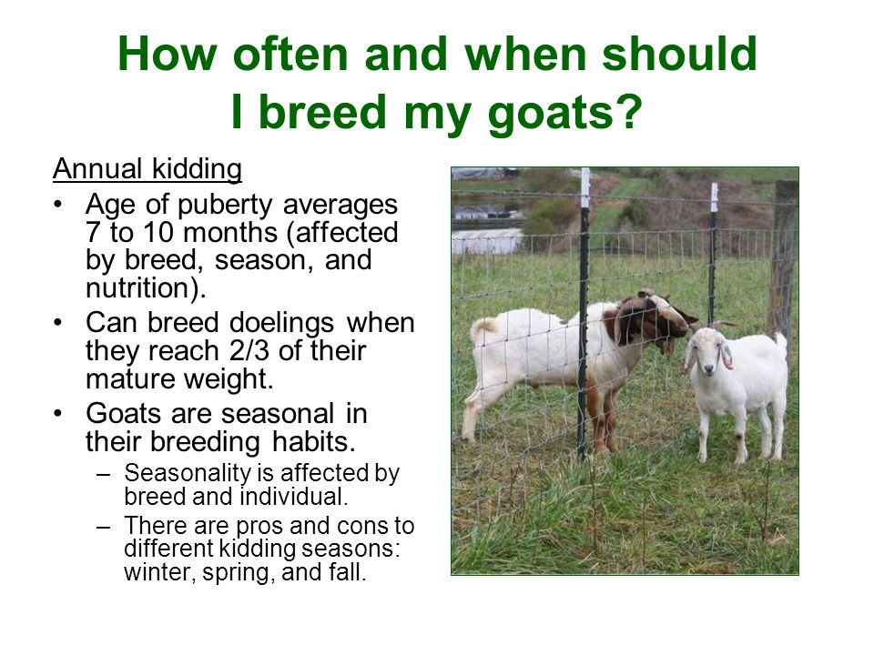 How often and when should I breed my goats.