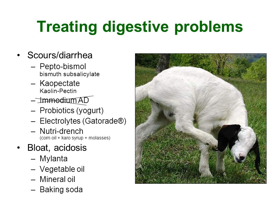 Treating digestive problems Scours/diarrhea –Pepto-bismol bismuth subsalicylate –Kaopectate Kaolin-Pectin –Immodium AD –Probiotics (yogurt) –Electrolytes (Gatorade®) –Nutri-drench (corn oil + karo syrup + molasses) Bloat, acidosis –Mylanta –Vegetable oil –Mineral oil –Baking soda