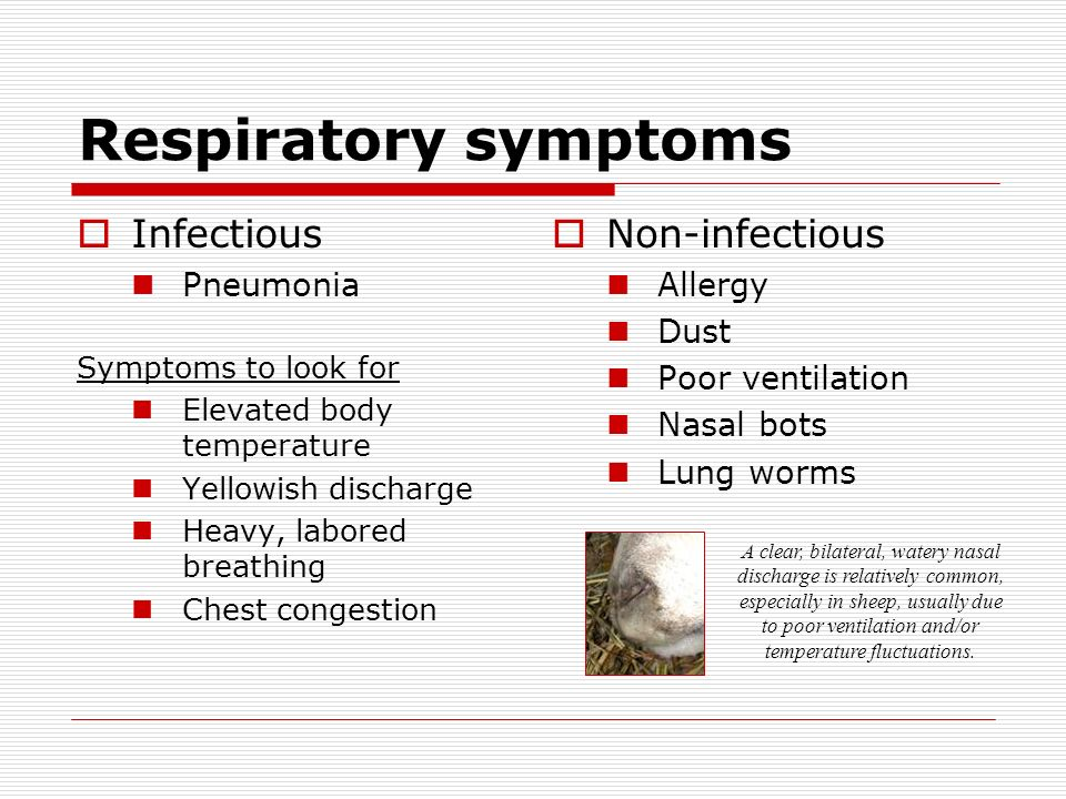 Respiratory symptoms Infectious Pneumonia Symptoms to look for Elevated body temperature Yellowish discharge Heavy, labored breathing Chest congestion Non-infectious Allergy Dust Poor ventilation Nasal bots Lung worms A clear, bilateral, watery nasal discharge is relatively common, especially in sheep, usually due to poor ventilation and/or temperature fluctuations.