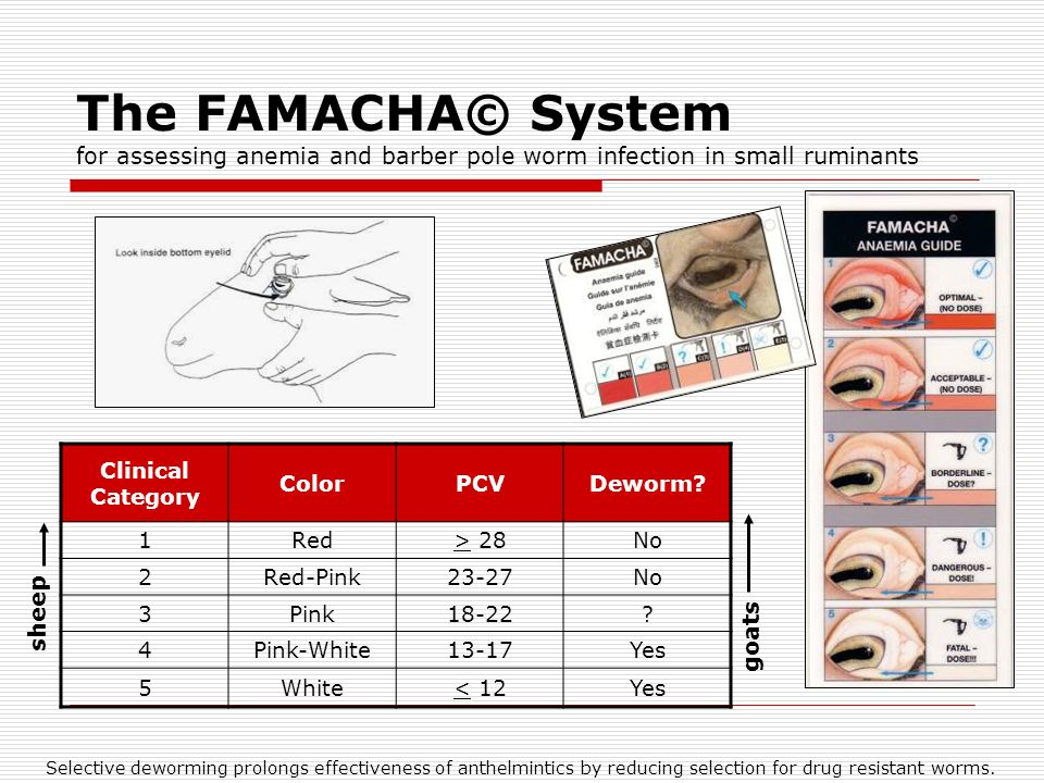 The FAMACHA© System for assessing anemia and barber pole worm infection in small ruminants Clinical Category ColorPCVDeworm.